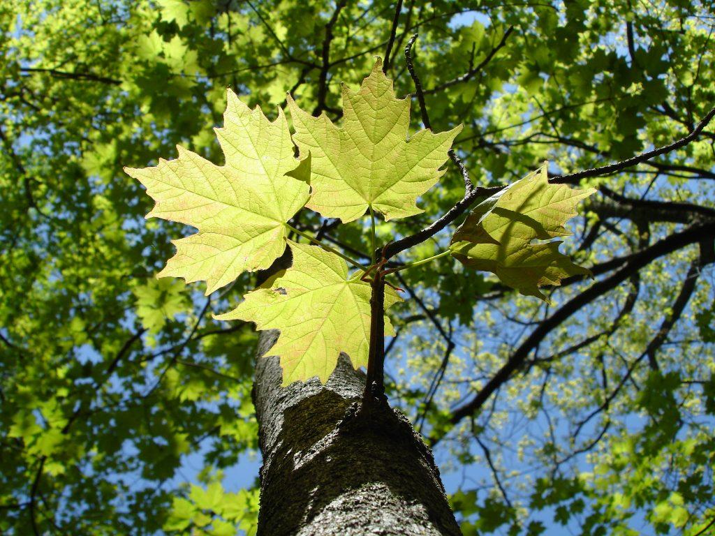 duluth_minnesota_tree_fall_patrick_moore