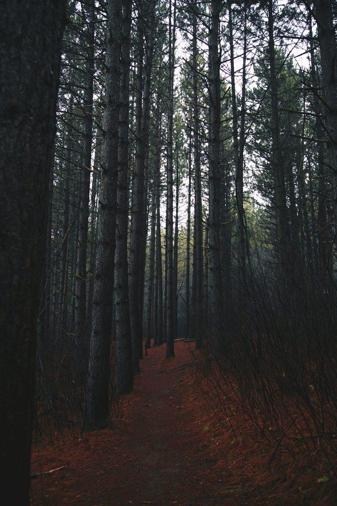hartley_fog-Ian_Deloney