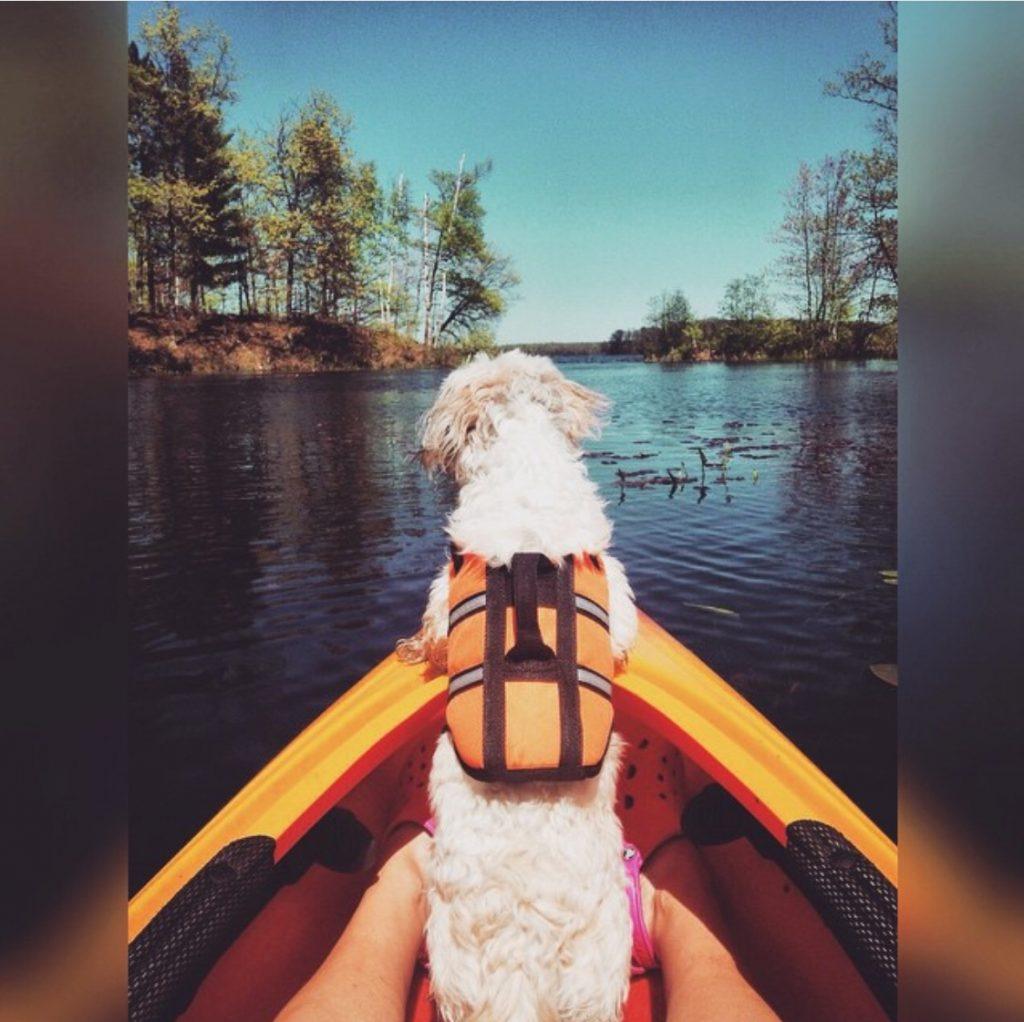 canoe_dog_summe_lake_explore_minnesota_sarah_fitch