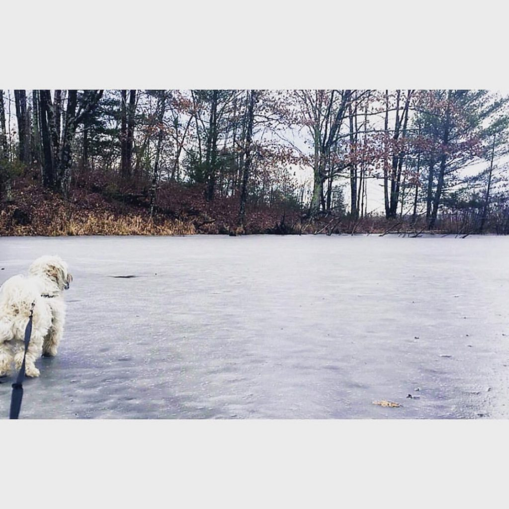dog_winter_snow_duluth_mn_sarah_fitch
