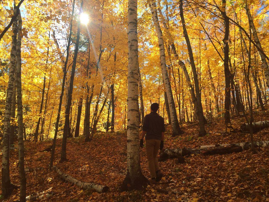 minnesota_photographer_fall_forest_exploremn_kelly_popham
