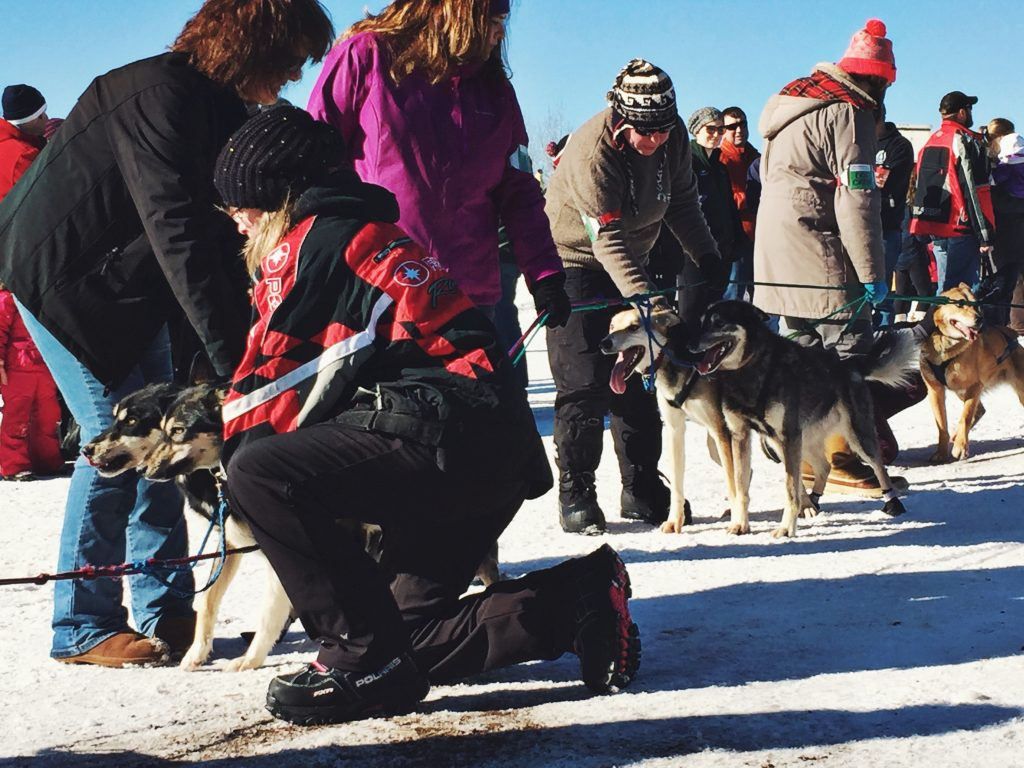 sled_dogs_mushers_race_beargrease_2016_duluth_minnesota