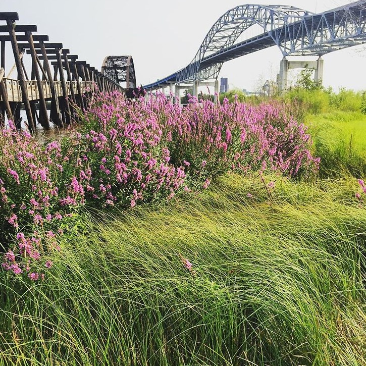 wild_flowers_industrial_bridge_duluth_mn_field_tom_barbano